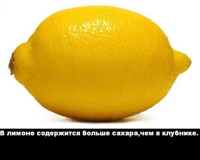 1337694619_1335423342_fakt_05 (700x560, 36Kb)