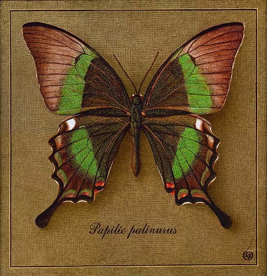фото картины бабочки