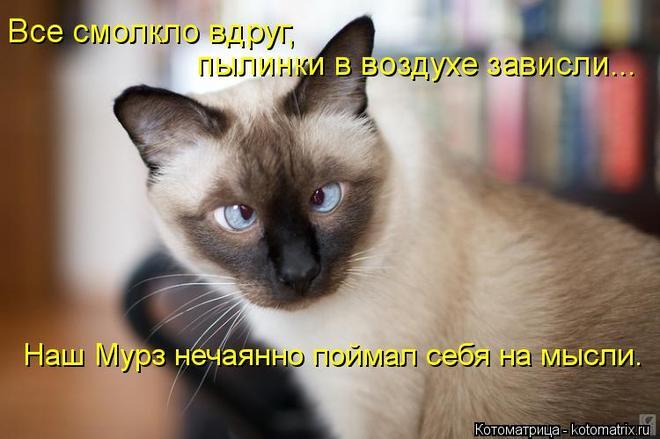kotomatritsa_2 (660x439, 41Kb)