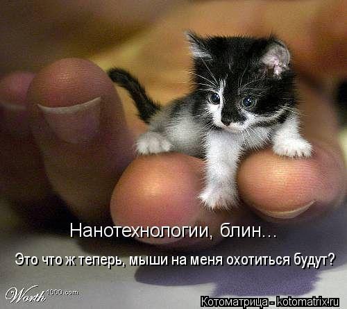 kotomatritsa_4 (500x445, 35Kb)