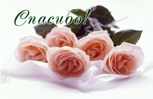 49741576_cvetuy_roza (312x203, 102Kb)