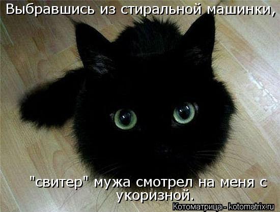 kotomatritsa_C6 (550x417, 35Kb)