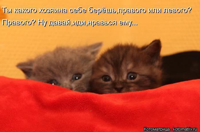 kotomatritsa_eW (700x463, 36Kb)