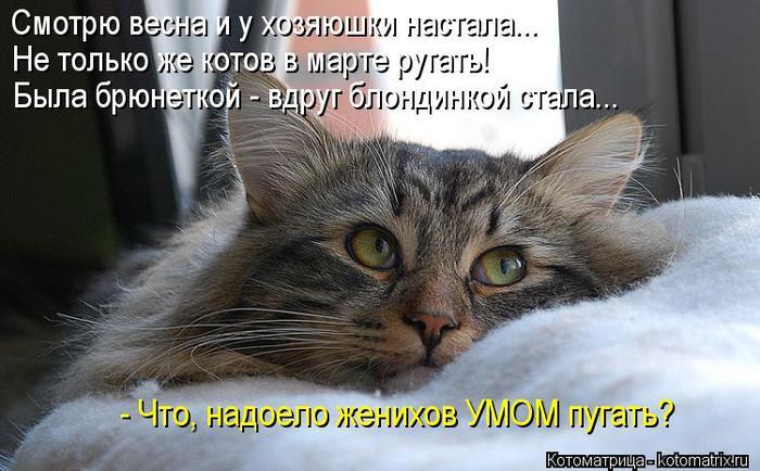 kotomatritsa_yV (700x434, 60Kb)