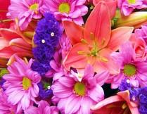 4839503_flowers (209x162, 20Kb)