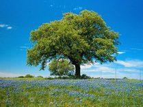 4839503_tree (209x157, 10Kb)