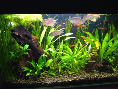 akvarium (400x300, 36Kb)