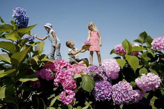 прикольные фото детей Jan Von Holleben 1 (540x360, 50Kb)