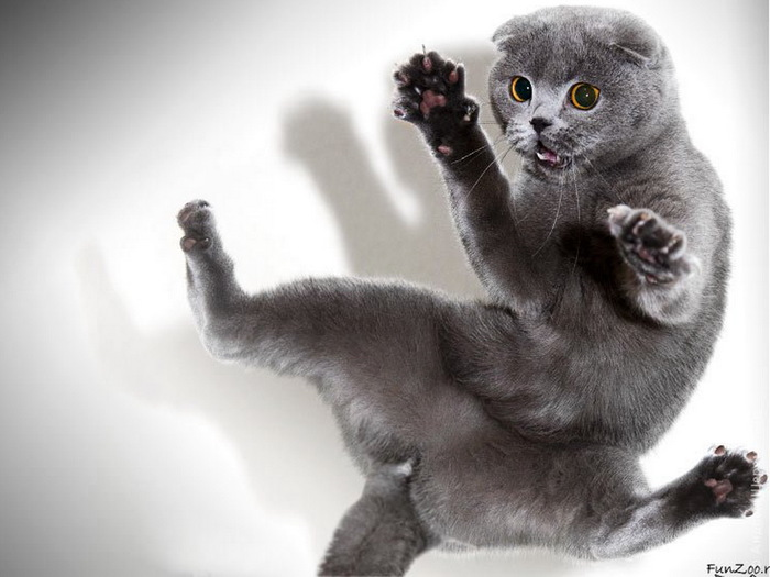 wallpapers_cats_600 (700x525, 85Kb)