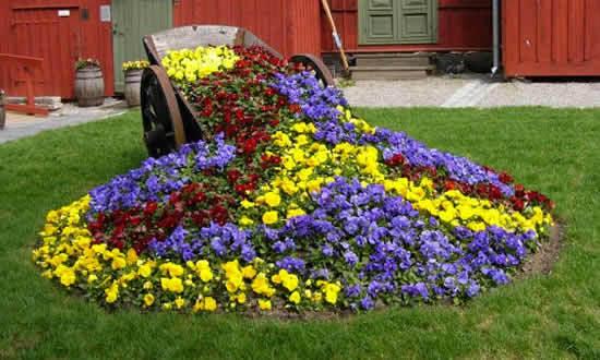 непрерывного цветения?
