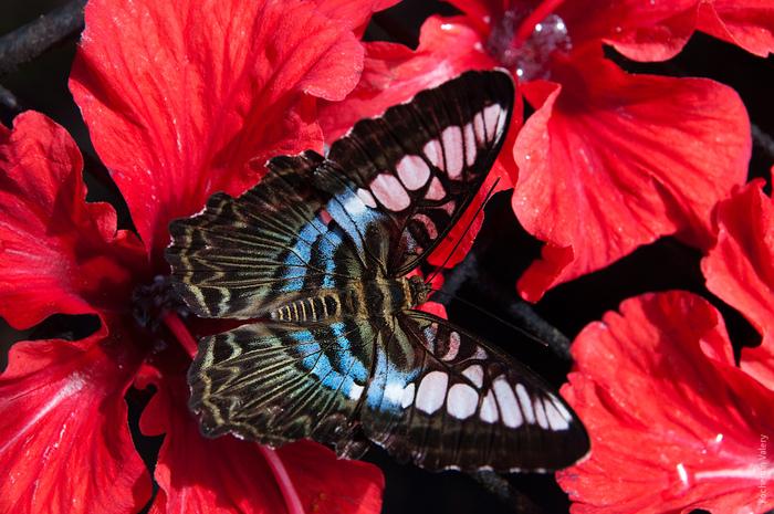 Малайзия - остров Пенанг, Ферма бабочек, Тропическая фруктовая ферма.