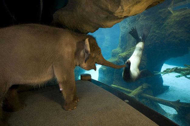 Earthguide Elephant Seals
