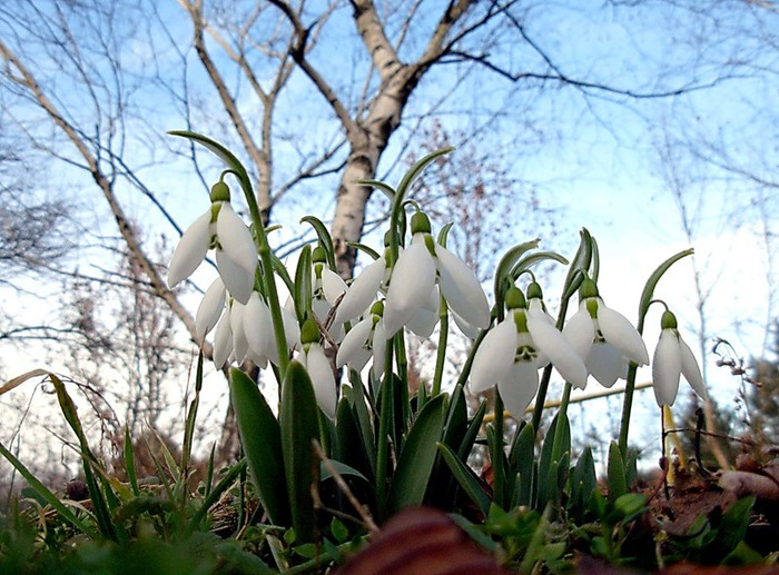 весна (700x517, 128Kb)