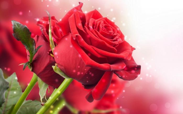 Анимационные картинки букеты цветов 7