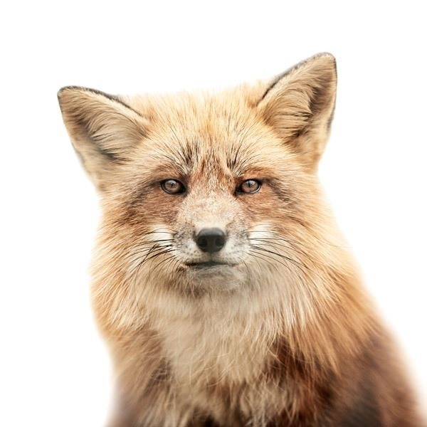ANIMAL PORTRAITS MORTEN KOLDBY PHOTOGRAPHY1