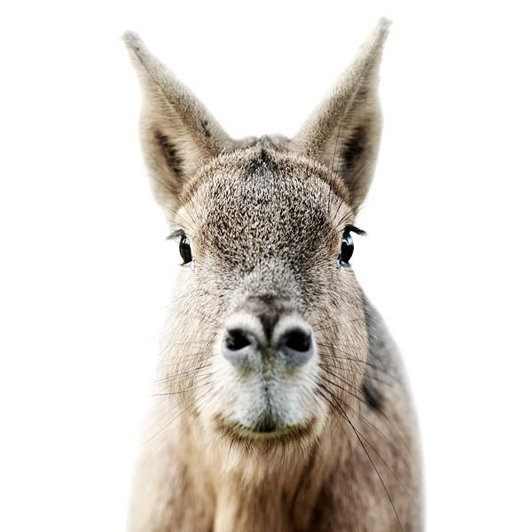 ANIMAL PORTRAITS MORTEN KOLDBY PHOTOGRAPHY6