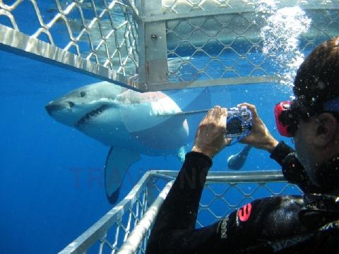 акула (480x360, 142Kb)