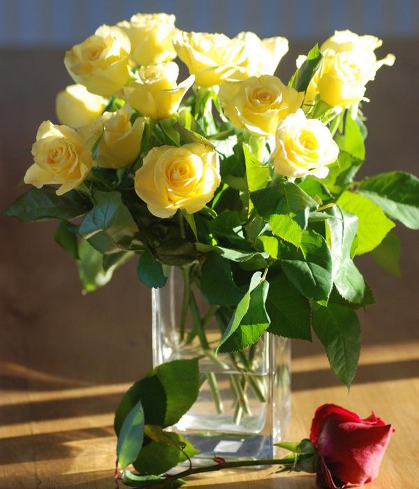 http://img0.liveinternet.ru/images/attach/c/7/98/61/98061352_Rose3.jpg
