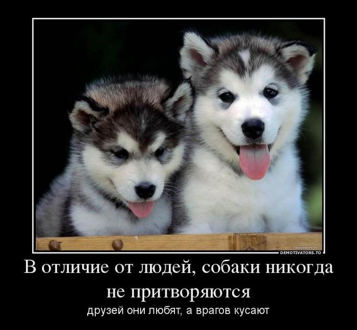 Чем больше я общаюсь с людьми, тем больше начинаю уважать собак...