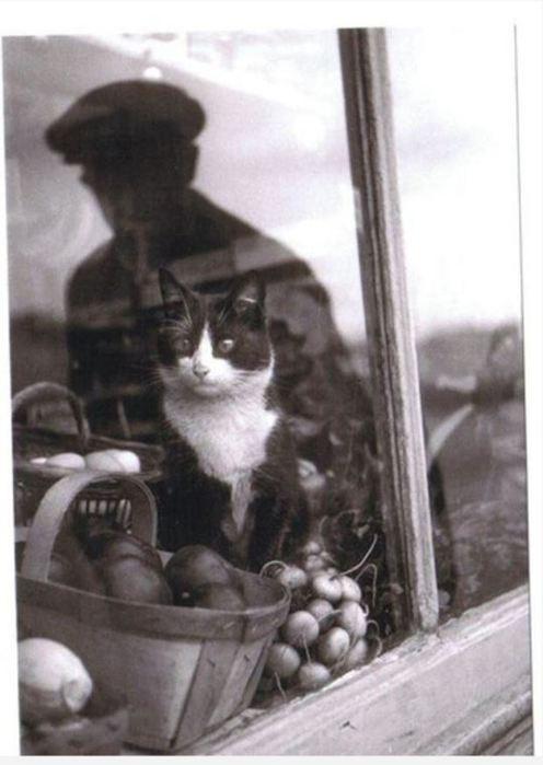 original cats 7 (496x700, 40Kb)