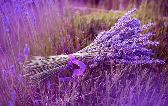 Flowers  Flower Delivery  Send Flowers Online  Teleflora