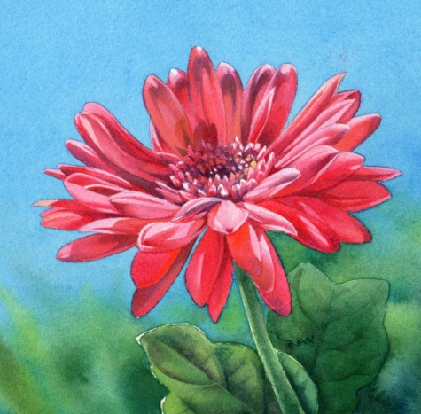 gerbera_daisy_sold_flower_watercolor_painting_a91fc737552e21b61f804fd53859c27d (475x467, 187Kb)