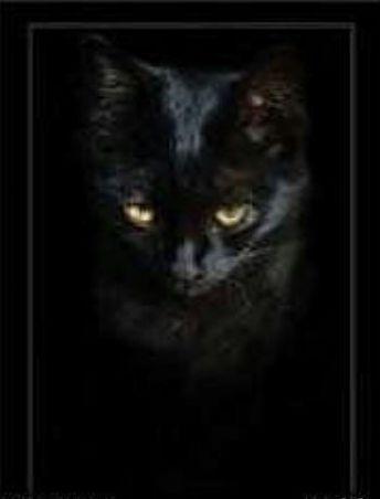 Часть 39 - Черный кот. Вышивка