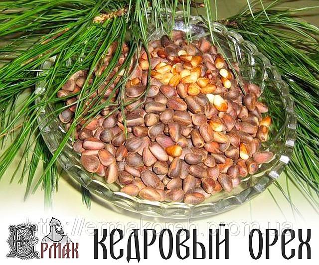 10090312_w640_h640_kedrovyj_oreh (640x532, 160Kb)