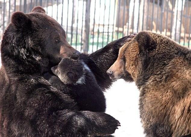 прикольные фото медведей 2 (634x457, 98Kb)