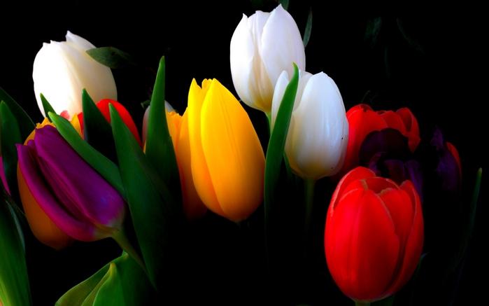 Тюльпаны/4979645_273428_1_ (700x437, 125Kb)