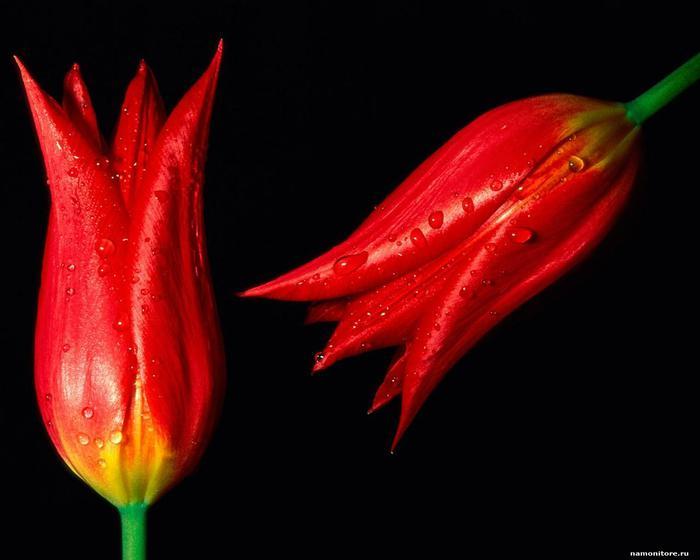цветы из бисера роза.