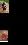 Превью 426 (437x700, 183Kb)
