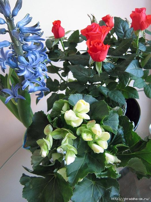 Цветы 1 (525x700, 298Kb)