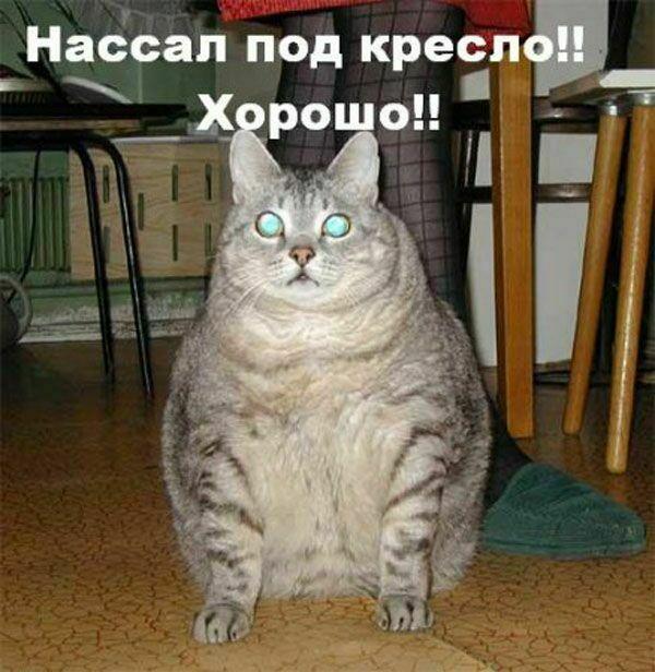 koshki4106 (600x616, 79Kb)