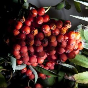 Растения-для-похудения-290x290 (290x290, 28Kb)