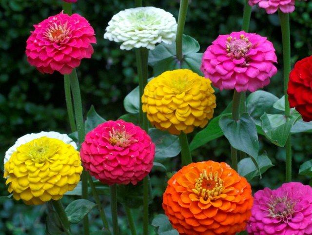 Сад цветов Zvetik-semizvetik - Part 6