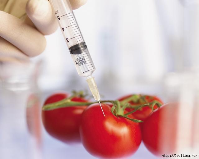 ГМО (640x512, 155Kb)