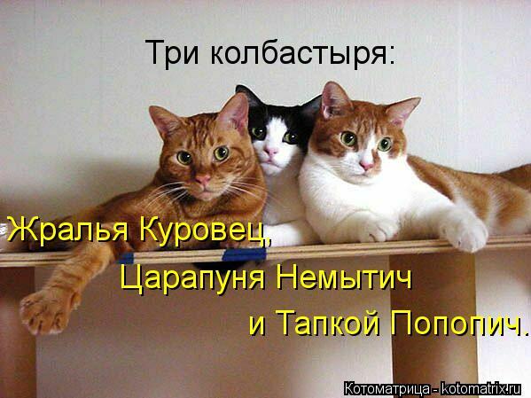 kotomatritsa_eG (599x449, 46Kb)