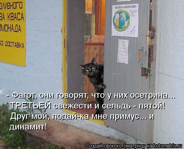 kotomatritsa_GK (600x489, 57Kb)