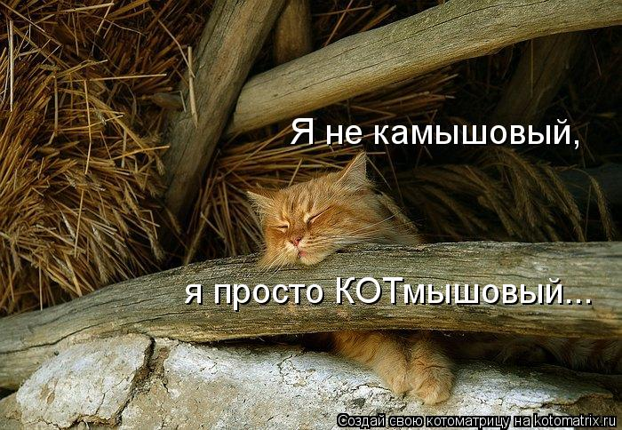 kotomatritsa_PO (700x484, 101Kb)