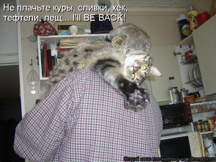 kotomatritsa_VF (700x524, 76Kb)
