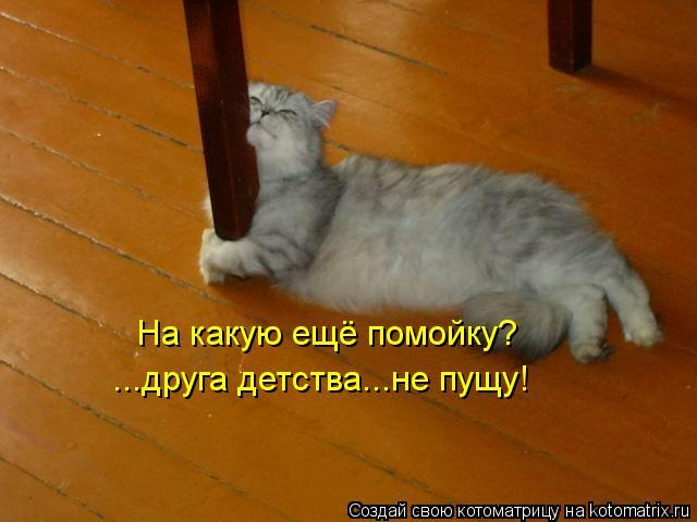 kotomatritsa_2o (640x480, 36Kb)