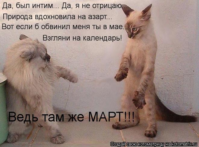 kotomatritsa_j2 (660x486, 52Kb)
