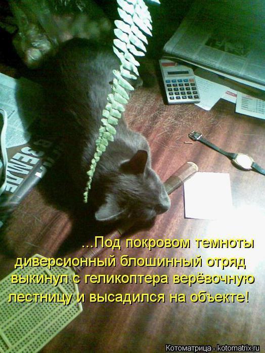 kotomatritsa_p5 (524x700, 73Kb)