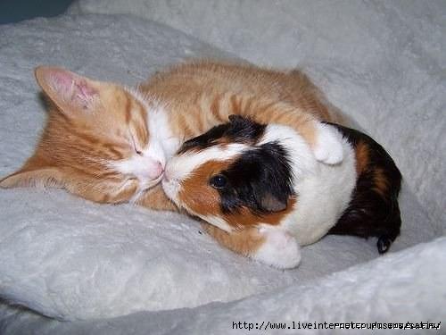 1270750026_cat-and-friend (500x375, 86Kb)