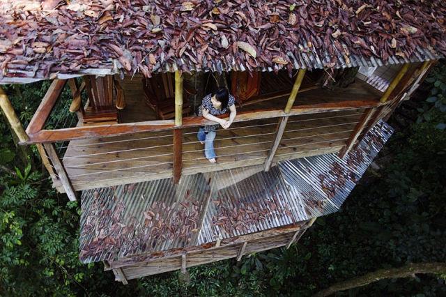 отель на деревьях 3 (640x426, 98Kb)