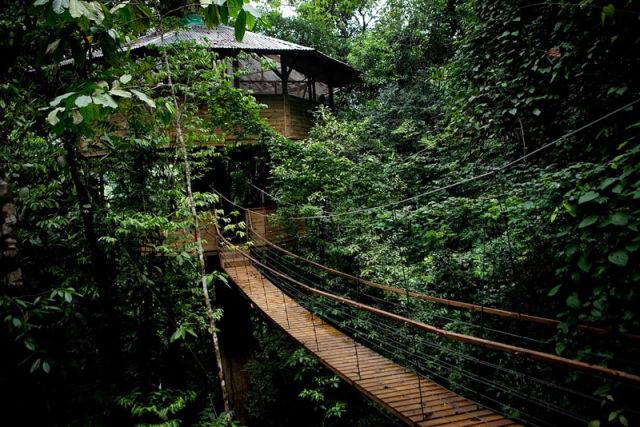 отель на деревьях 5 (640x427, 97Kb)