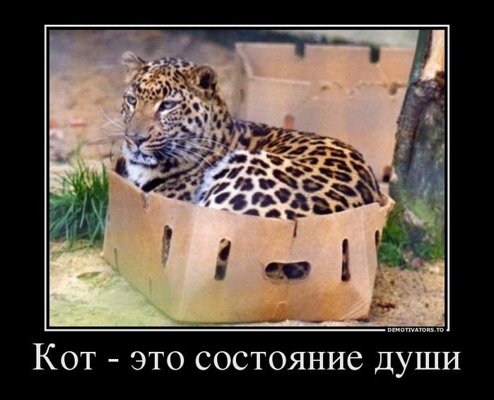 Так кот или не кот?