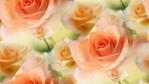 Превью роза (400x225, 30Kb)