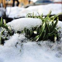 3769051_vesna_pod_snegom (200x200, 12Kb)